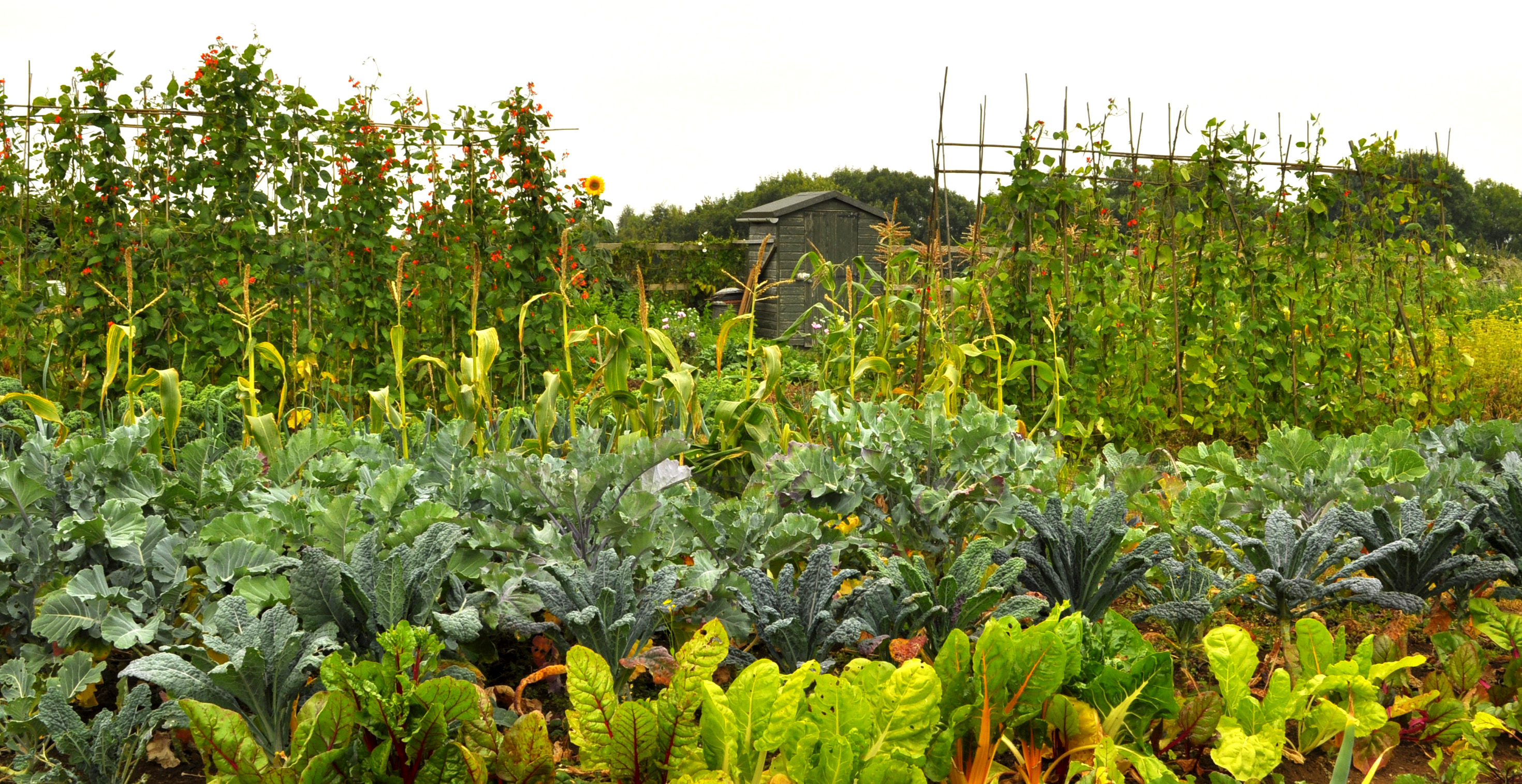 Haydon Allotments